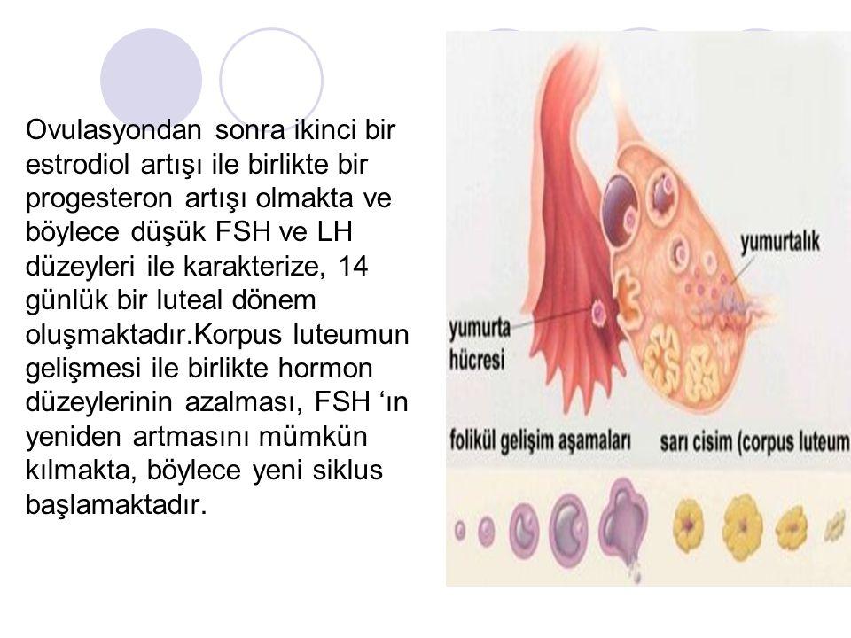 Ovulasyondan sonra ikinci bir estrodiol artışı ile birlikte bir progesteron artışı olmakta ve böylece düşük FSH ve LH düzeyleri ile karakterize, 14 gü