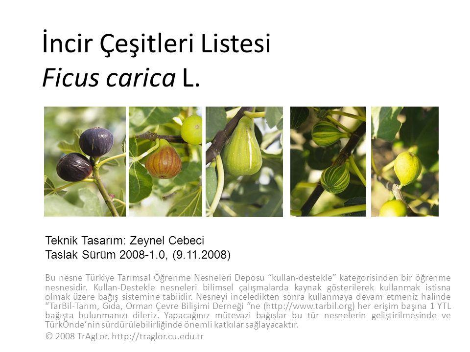 İncir Çeşitleri Listesi Ficus carica L. Bu nesne Türkiye Tarımsal Öğrenme Nesneleri Deposu kullan-destekle kategorisinden bir öğrenme nesnesidir. Kull