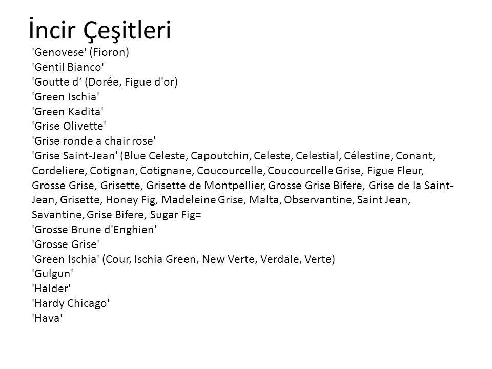 İncir Çeşitleri 'Genovese' (Fioron) 'Gentil Bianco' 'Goutte d (Dorée, Figue d'or) 'Green Ischia' 'Green Kadita' 'Grise Olivette' 'Grise ronde a chair