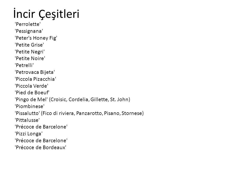 İncir Çeşitleri 'Perrolette' 'Pessignana' 'Peter's Honey Fig' 'Petite Grise' 'Petite Negri' 'Petite Noire' 'Petrelli' 'Petrovaca Bijeta' 'Piccola Piza