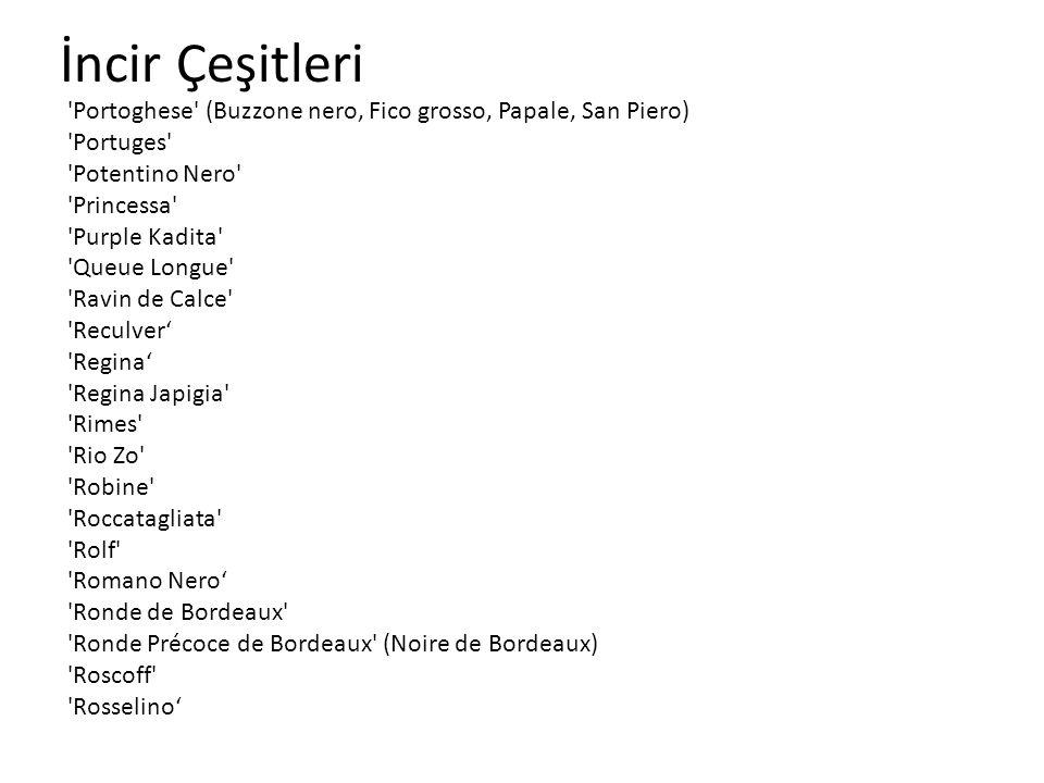 İncir Çeşitleri 'Portoghese' (Buzzone nero, Fico grosso, Papale, San Piero) 'Portuges' 'Potentino Nero' 'Princessa' 'Purple Kadita' 'Queue Longue' 'Ra