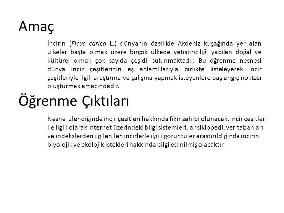 İncir Çeşitleri White Adriatic White Cypros White Ischia White Marseille Yellow Neeches Yokneam Black Zamarcica Zatas Zidi Zimica