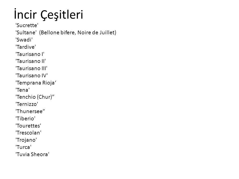 İncir Çeşitleri 'Sucrette' 'Sultane' (Bellone bifere, Noire de Juillet) 'Swadi' 'Tardive' 'Taurisano I' 'Taurisano II' 'Taurisano III' 'Taurisano IV'