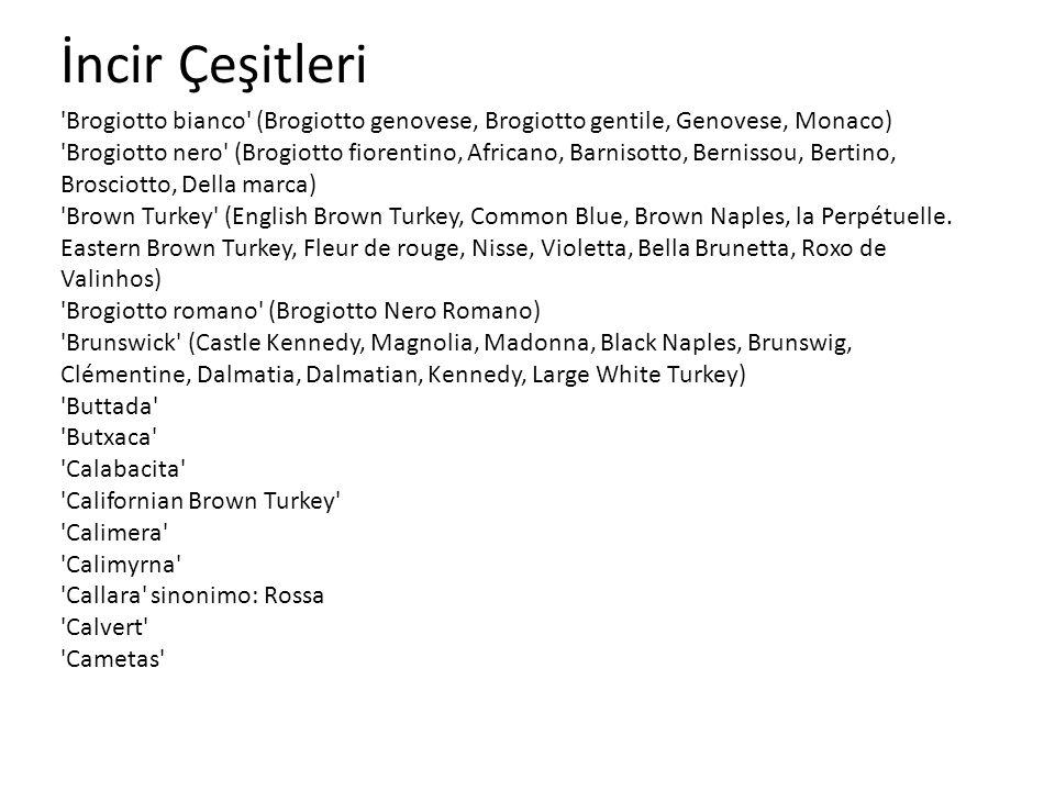 İncir Çeşitleri 'Brogiotto bianco' (Brogiotto genovese, Brogiotto gentile, Genovese, Monaco) 'Brogiotto nero' (Brogiotto fiorentino, Africano, Barniso