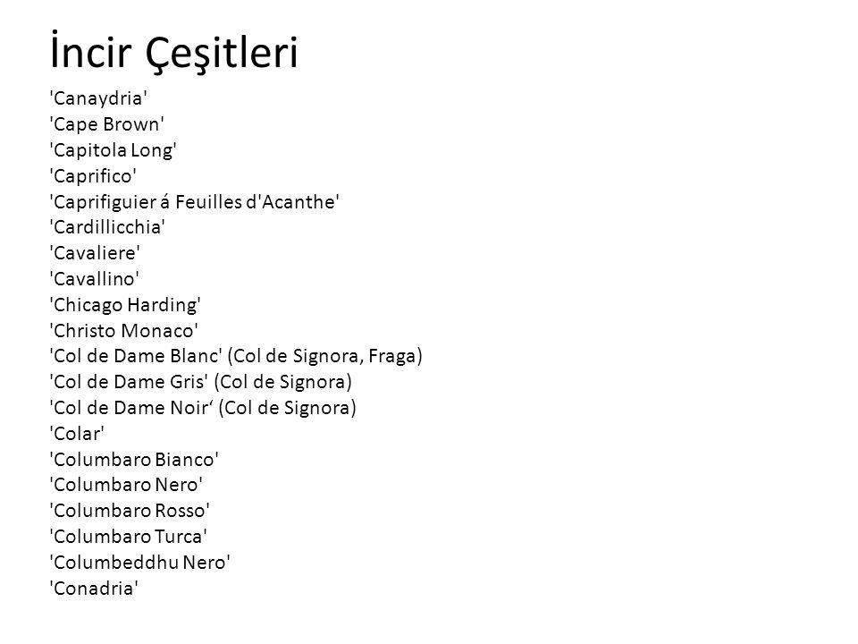 İncir Çeşitleri 'Canaydria' 'Cape Brown' 'Capitola Long' 'Caprifico' 'Caprifiguier á Feuilles d'Acanthe' 'Cardillicchia' 'Cavaliere' 'Cavallino' 'Chic