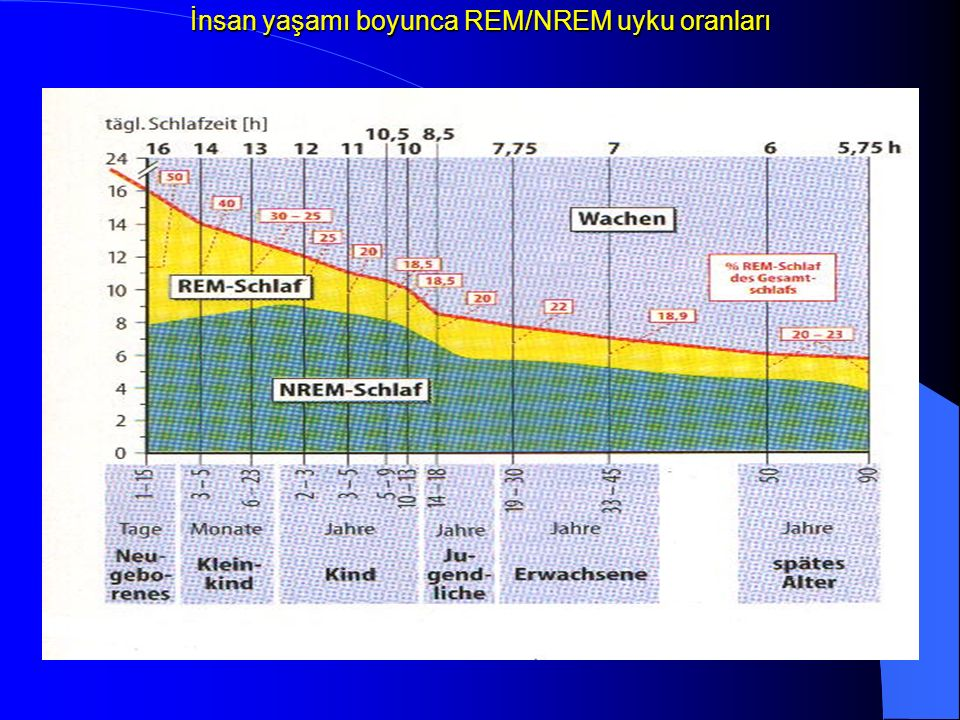 İnsan yaşamı boyunca REM/NREM uyku oranları