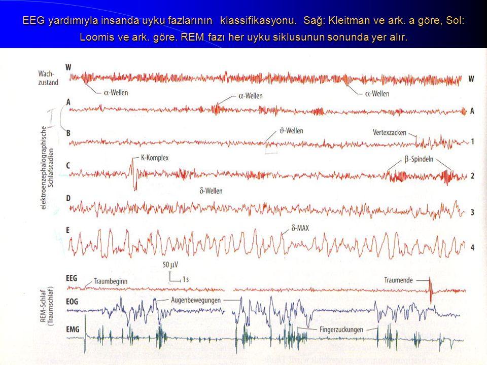 EEG yardımıyla insanda uyku fazlarının klassifikasyonu. Sağ: Kleitman ve ark. a göre, Sol: Loomis ve ark. göre. REM fazı her uyku siklusunun sonunda y