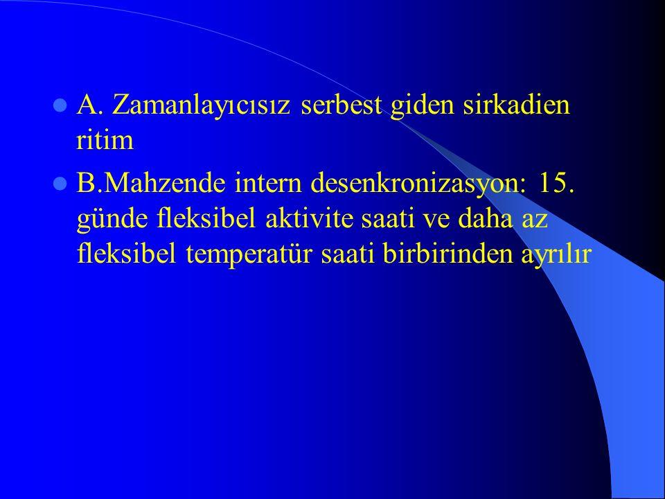 A. Zamanlayıcısız serbest giden sirkadien ritim B.Mahzende intern desenkronizasyon: 15. günde fleksibel aktivite saati ve daha az fleksibel temperatür