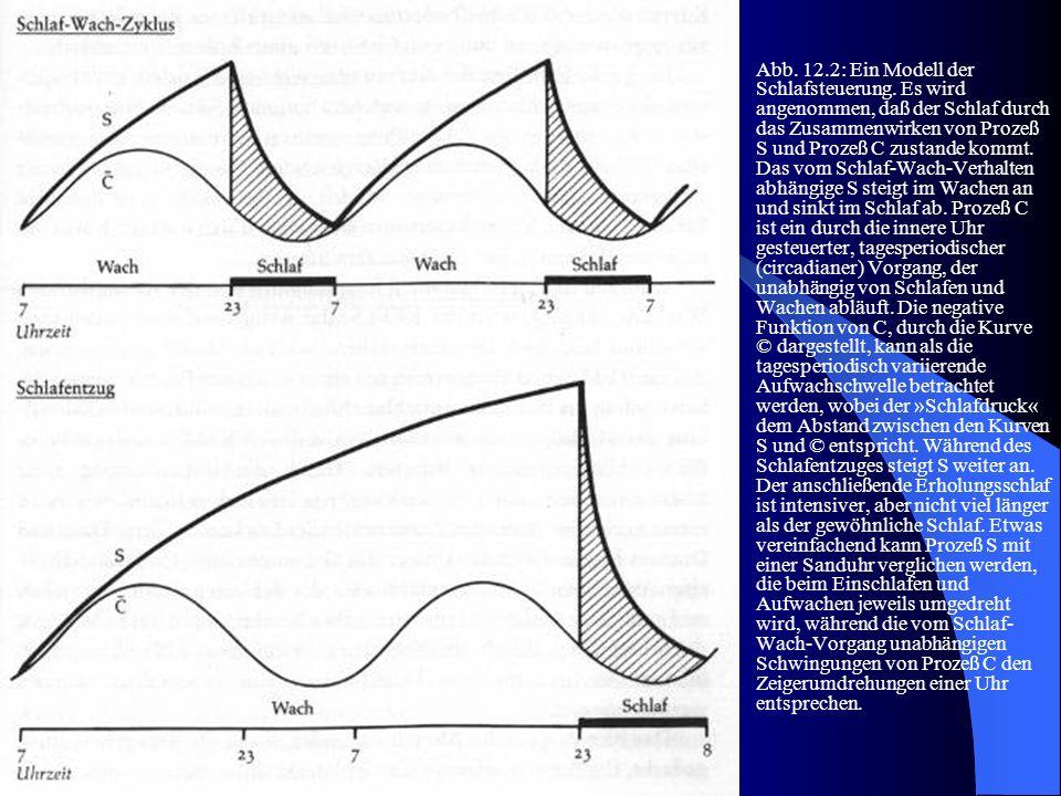 Abb. 12.2: Ein Modell der Schlafsteuerung. Es wird angenommen, daß der Schlaf durch das Zusammenwirken von Prozeß S und Prozeß C zustande kommt. Das v