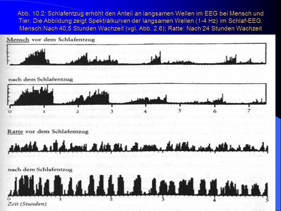 Abb. 10.2: Schlafentzug erhöht den Anteil an langsamen Wellen im EEG bei Mensch und Tier. Die Abbildung zeigt Spektralkurven der langsamen Wellen (1-4