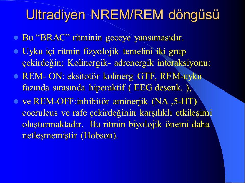 Ultradiyen NREM/REM döngüsü Bu BRAC ritminin geceye yansımasıdır. Uyku içi ritmin fizyolojik temelini iki grup çekirdeğin; Kolinergik- adrenergik inte