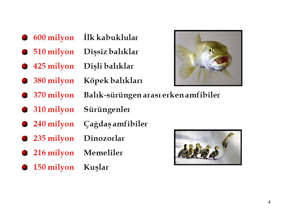 600 milyon 510 milyon 425 milyon 380 milyon 370 milyon 310 milyon 240 milyon 235 milyon 216 milyon 150 milyon İlk kabuklular Dişsiz balıklar Dişli bal
