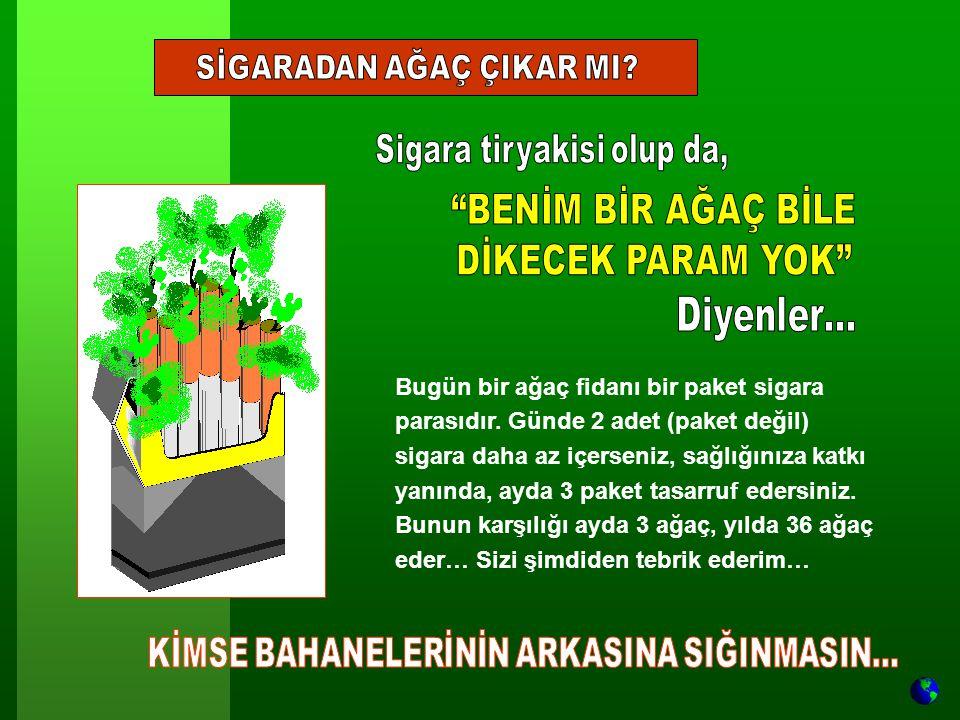 Bugün bir ağaç fidanı bir paket sigara parasıdır.