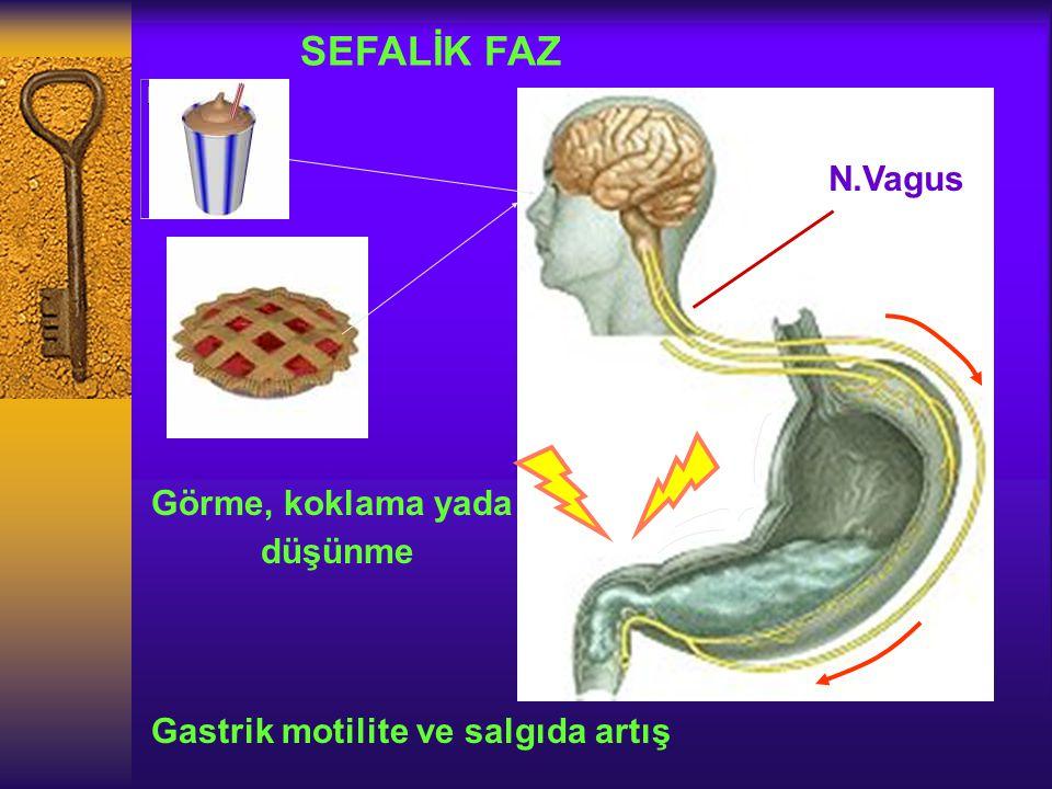 SEFALİK FAZ Görme, koklama yada düşünme Gastrik motilite ve salgıda artış N.Vagus