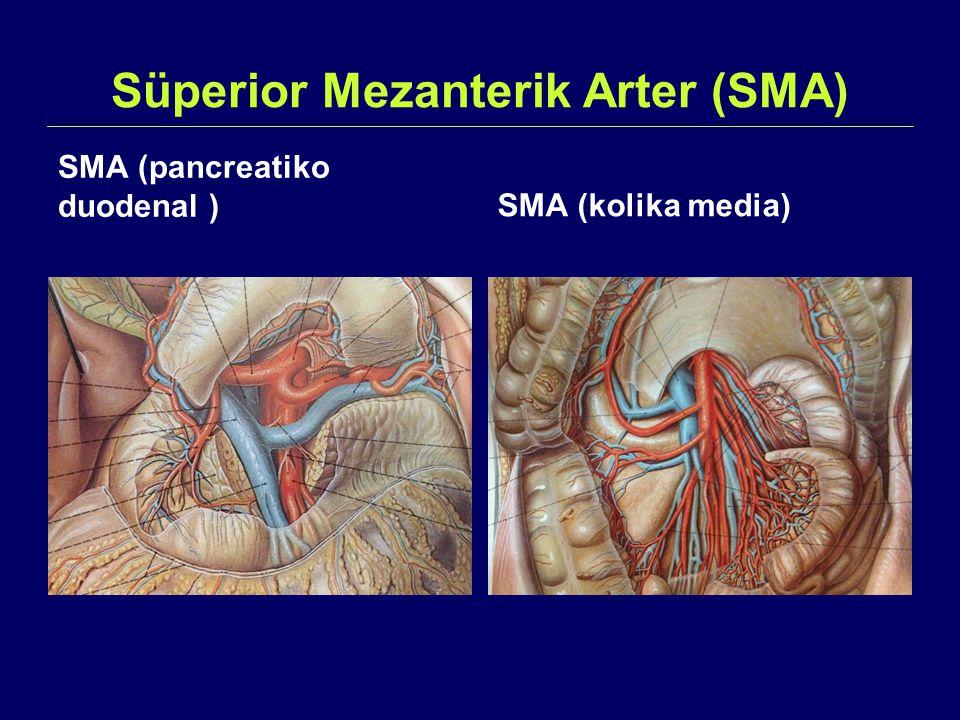 Süperior Mezanterik Arter (SMA) SMA (pancreatiko duodenal )SMA (kolika media)