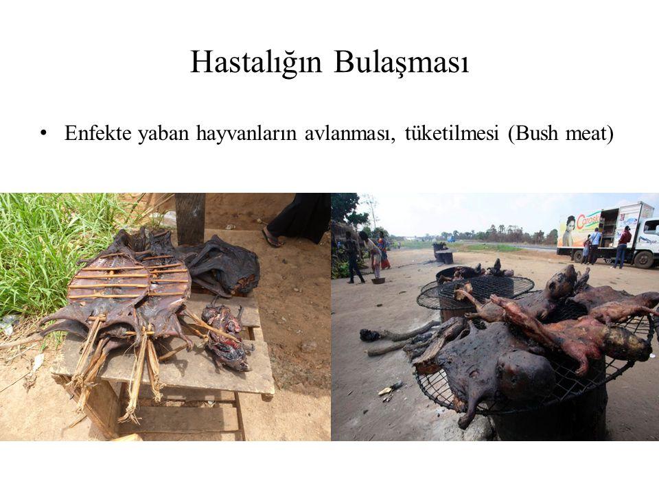 Hastalığın Bulaşması Enfekte yaban hayvanların avlanması, tüketilmesi (Bush meat)