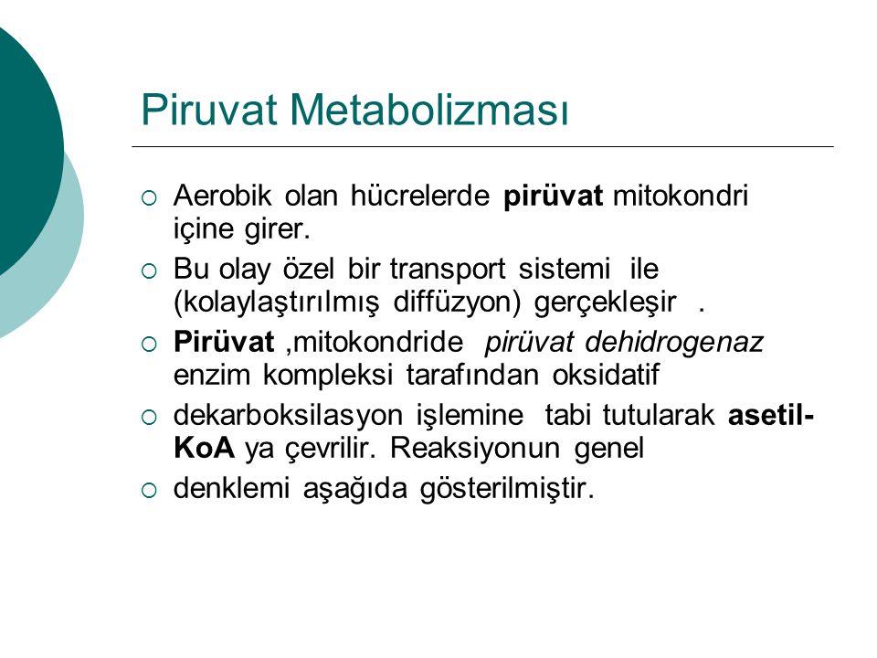 Piruvat Metabolizması  Aerobik olan hücrelerde pirüvat mitokondri içine girer.  Bu olay özel bir transport sistemi ile (kolaylaştırılmış diffüzyon)