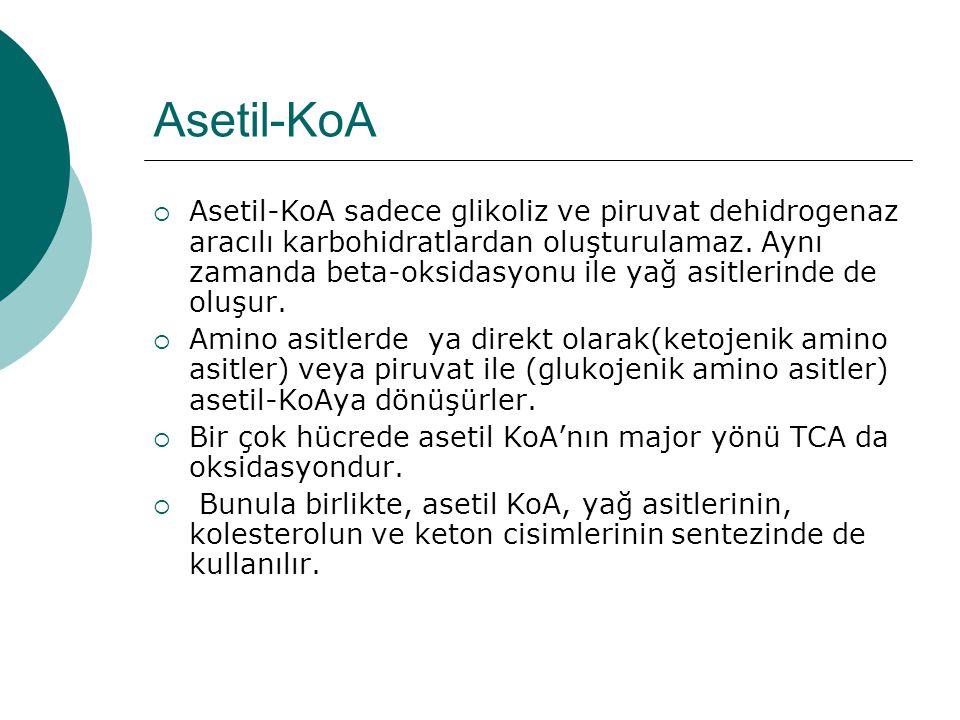 Asetil-KoA  Asetil-KoA sadece glikoliz ve piruvat dehidrogenaz aracılı karbohidratlardan oluşturulamaz. Aynı zamanda beta-oksidasyonu ile yağ asitler