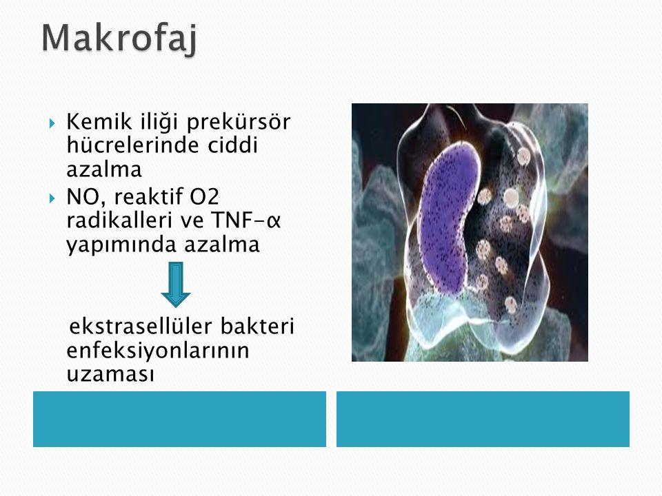  Kemik iliği prekürsör hücrelerinde ciddi azalma  NO, reaktif O2 radikalleri ve TNF-α yapımında azalma ekstrasellüler bakteri enfeksiyonlarının uzam