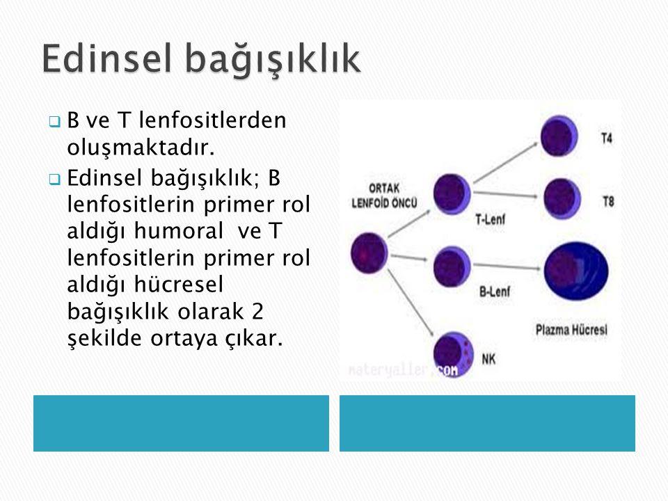  B ve T lenfositlerden oluşmaktadır.  Edinsel bağışıklık; B lenfositlerin primer rol aldığı humoral ve T lenfositlerin primer rol aldığı hücresel ba