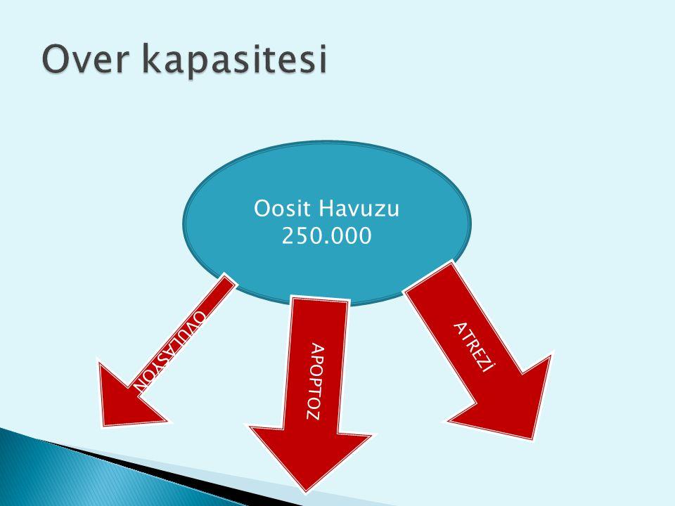 Oosit Havuzu 250.000 ATREZİ APOPTOZ OVULASYON