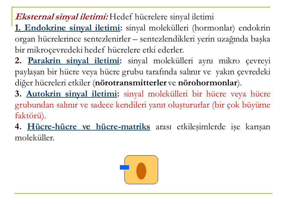 Eksternal sinyal iletimi: Hedef hücrelere sinyal iletimi 1. Endokrine sinyal iletimi: sinyal molekülleri (hormonlar) endokrin organ hücrelerince sente