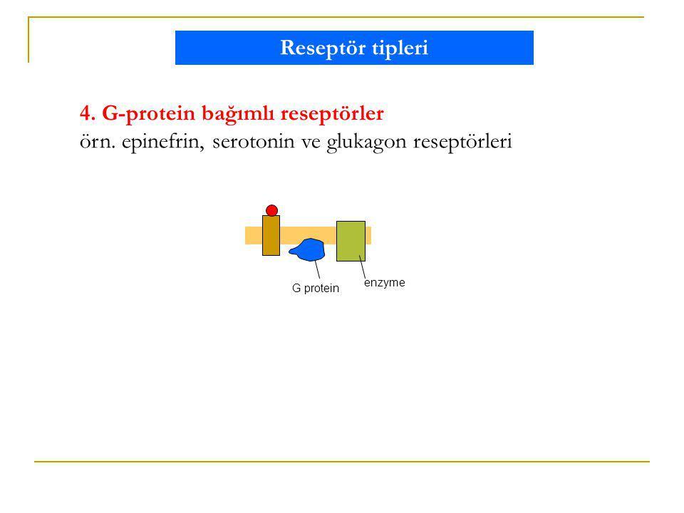 4. G-protein bağımlı reseptörler örn. epinefrin, serotonin ve glukagon reseptörleri G protein enzyme Reseptör tipleri