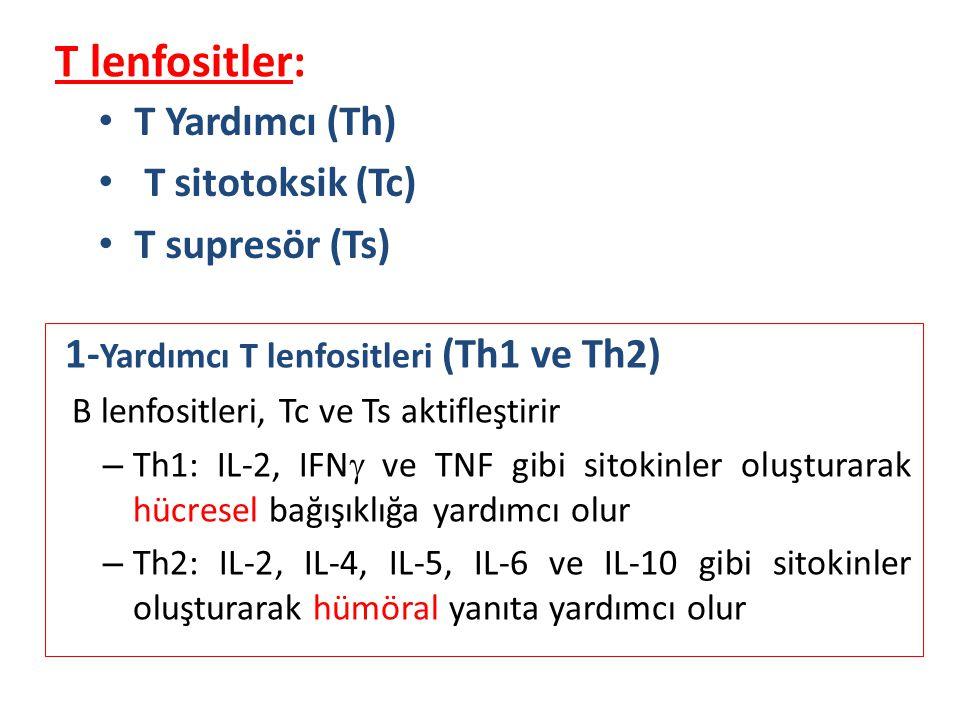 T lenfositler: T Yardımcı (Th) T sitotoksik (Tc) T supresör (Ts) 1- Yardımcı T lenfositleri (Th1 ve Th2) B lenfositleri, Tc ve Ts aktifleştirir – Th1: IL-2, IFN  ve TNF gibi sitokinler oluşturarak hücresel bağışıklığa yardımcı olur – Th2: IL-2, IL-4, IL-5, IL-6 ve IL-10 gibi sitokinler oluşturarak hümöral yanıta yardımcı olur