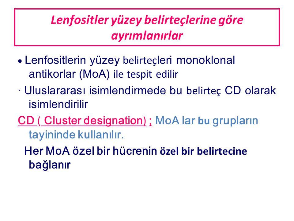 Lenfositler yüzey belirteçlerine göre ayrımlanırlar  Lenfositlerin yüzey belirteç leri monoklonal antikorlar (MoA) ile tespit edilir · Uluslararası isimlendirmede bu belirteç CD olarak isimlendirilir CD ( Cluster designation ) ; MoA lar bu grupların tayininde kullanılır.