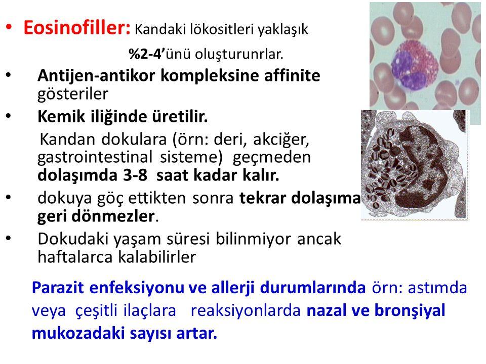 Eosinofiller: Kandaki lökositleri yaklaşık %2-4'ünü oluşturunrlar.