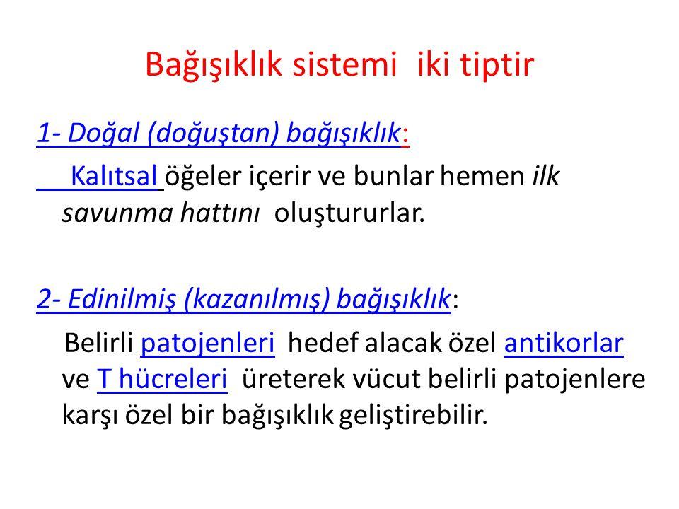 KEMİK İLİĞİ Fötal hayatın 4.