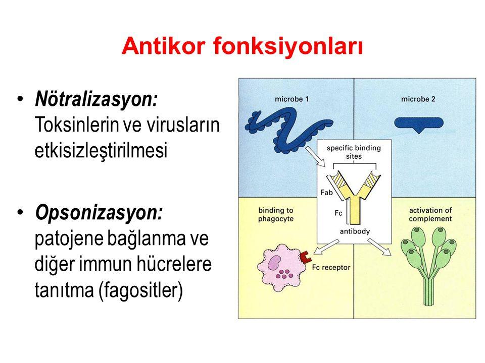 Antikor fonksiyonları Nötralizasyon: Toksinlerin ve virusların etkisizleştirilmesi Opsonizasyon: patojene bağlanma ve diğer immun hücrelere tanıtma (fagositler)
