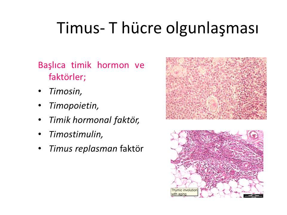 Timus- T hücre olgunlaşması Başlıca timik hormon ve faktörler; Timosin, Timopoietin, Timik hormonal faktör, Timostimulin, Timus replasman faktör