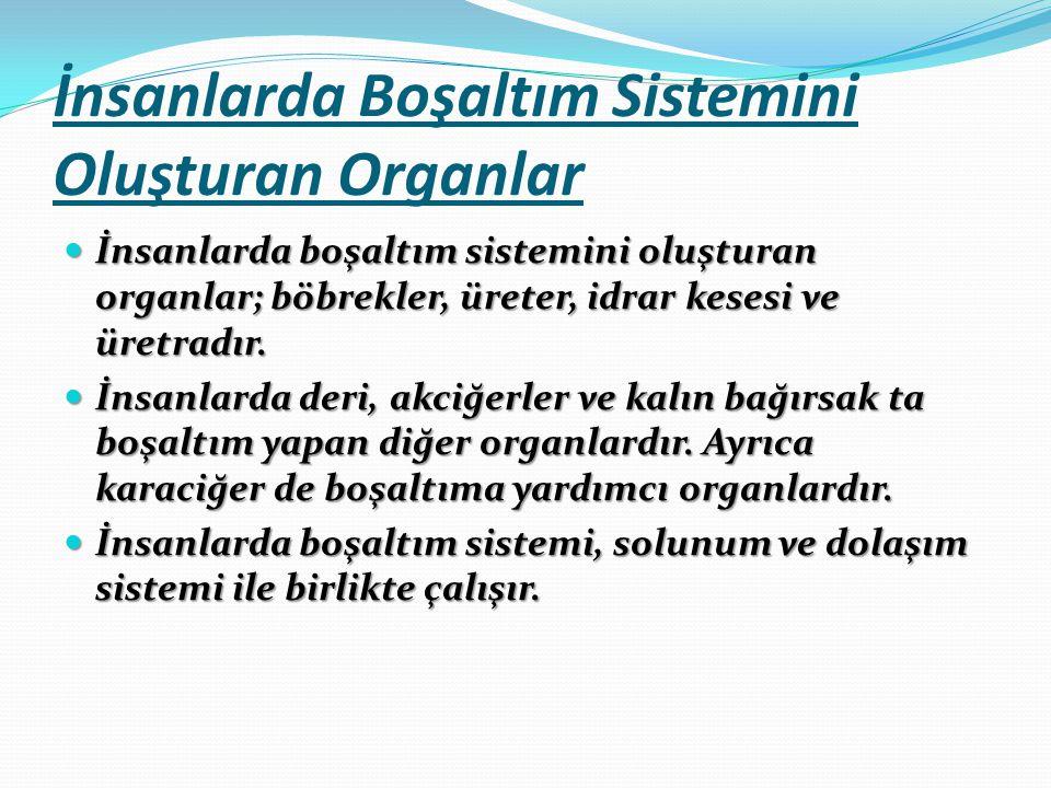 İnsanlarda Boşaltım Sistemini Oluşturan Organlar İnsanlarda boşaltım sistemini oluşturan organlar; böbrekler, üreter, idrar kesesi ve üretradır.