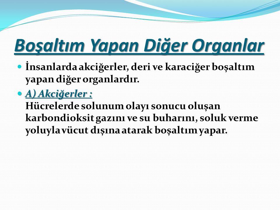 Boşaltım Yapan Diğer Organlar İnsanlarda akciğerler, deri ve karaciğer boşaltım yapan diğer organlardır.
