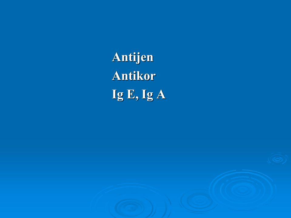 AntijenAntikor Ig E, Ig A
