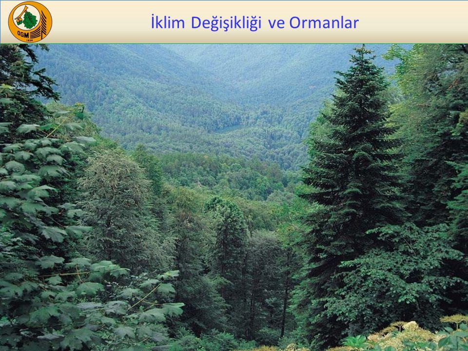Ormanların Önemi 20 Ormanlar ve okyanuslar en önemli karasal karbon yutak alanlarıdır.