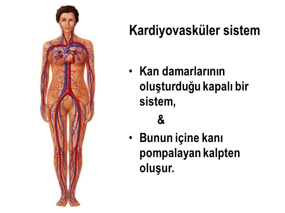 Kardiyovasküler sistem Kan damarlarının oluşturduğu kapalı bir sistem, & Bunun içine kanı pompalayan kalpten oluşur.