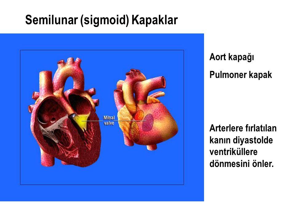 Semilunar (sigmoid) Kapaklar Aort kapağı Pulmoner kapak Arterlere fırlatılan kanın diyastolde ventriküllere dönmesini önler.