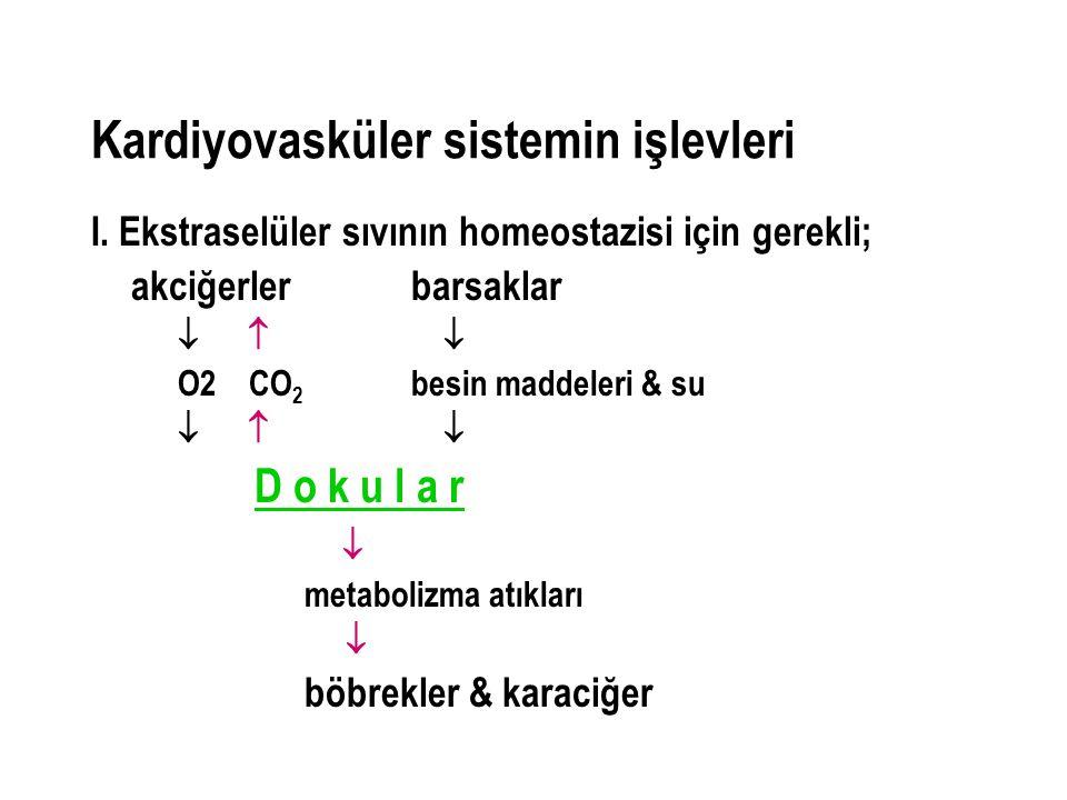 Kardiyovasküler sistemin işlevleri I. Ekstraselüler sıvının homeostazisi için gerekli; akciğerlerbarsaklar    O2 CO 2 besin maddeleri & su    D