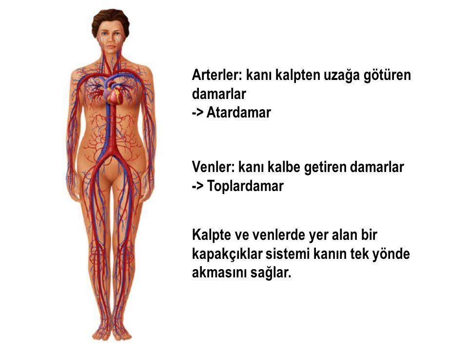Arterler: kanı kalpten uzağa götüren damarlar -> Atardamar Venler: kanı kalbe getiren damarlar -> Toplardamar Kalpte ve venlerde yer alan bir kapakçık