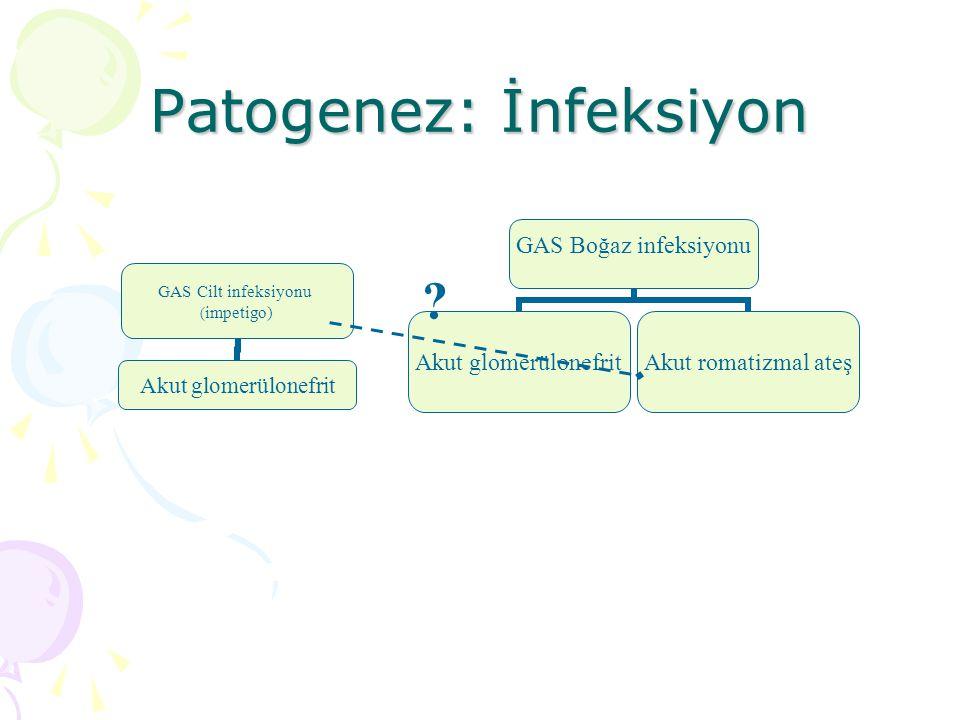 Patogenez: İnfeksiyon GAS Cilt infeksiyonu (impetigo) Akut glomerülonefrit GAS Boğaz infeksiyonu Akut glomerülonefritAkut romatizmal ateş ?
