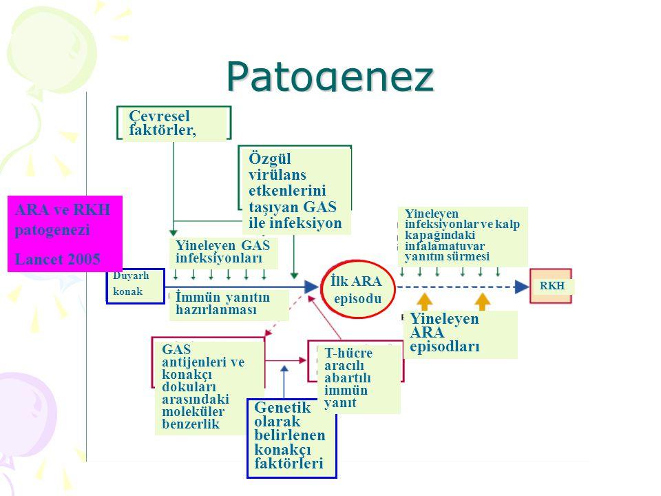 Patogenez: İmmün yanıt Otoimmün yanıt Patojen ve konakçı dokuları üzerindeki epitopların moleküler benzerliği Streptokokal M proteiniyle miyosin arasındaki benzerlik (Romatizmal kardit)