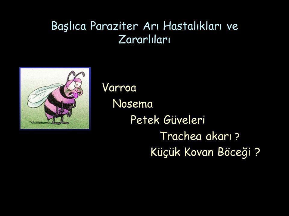 Başlıca Paraziter Arı Hastalıkları ve Zararlıları Varroa Nosema Petek Güveleri Trachea akarı .
