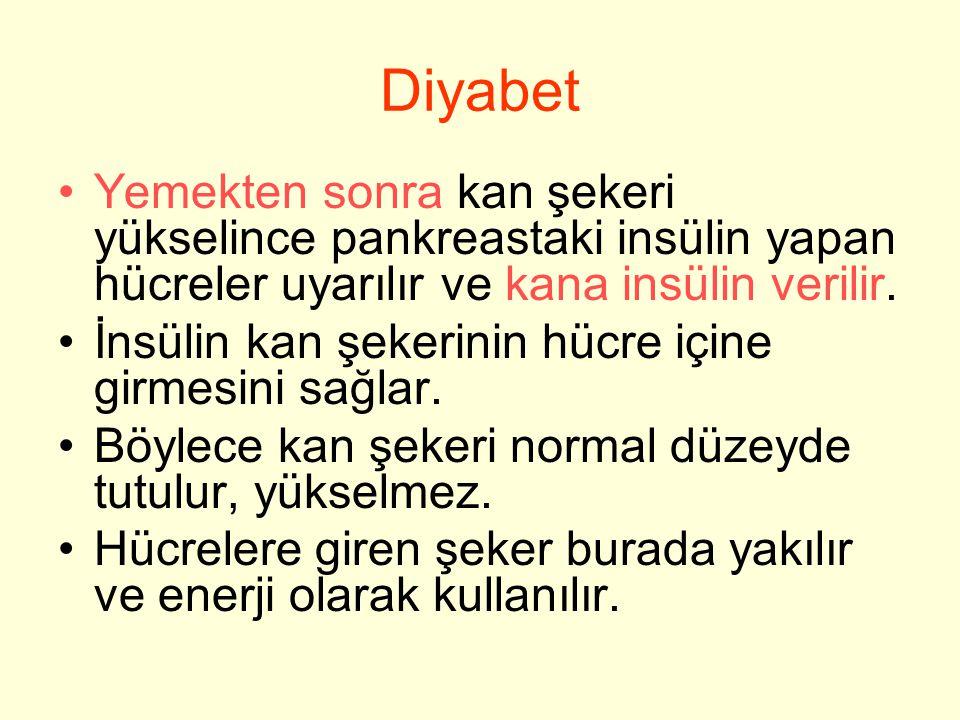 Diyabet Yemekten sonra kan şekeri yükselince pankreastaki insülin yapan hücreler uyarılır ve kana insülin verilir. İnsülin kan şekerinin hücre içine g