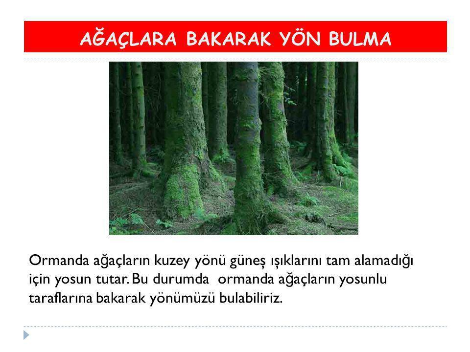 AĞAÇLARA BAKARAK YÖN BULMA Ormanda a ğ açların kuzey yönü güneş ışıklarını tam alamadı ğ ı için yosun tutar. Bu durumda ormanda a ğ açların yosunlu ta