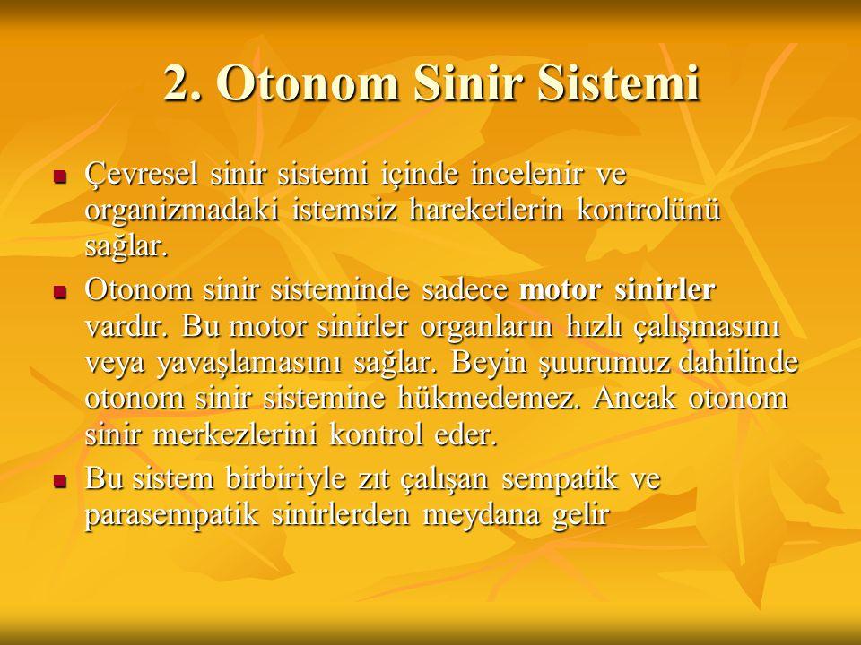 2. Otonom Sinir Sistemi Çevresel sinir sistemi içinde incelenir ve organizmadaki istemsiz hareketlerin kontrolünü sağlar. Çevresel sinir sistemi içind
