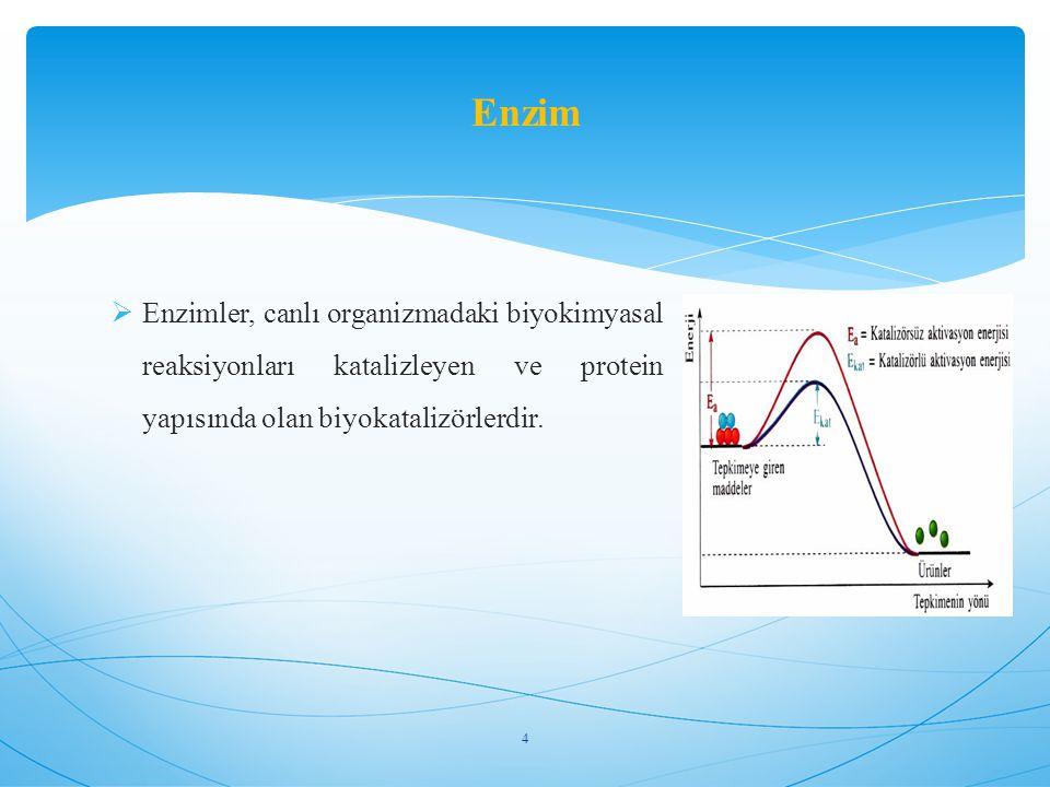  Enzimler, canlı organizmadaki biyokimyasal reaksiyonları katalizleyen ve protein yapısında olan biyokatalizörlerdir. Enzim 4