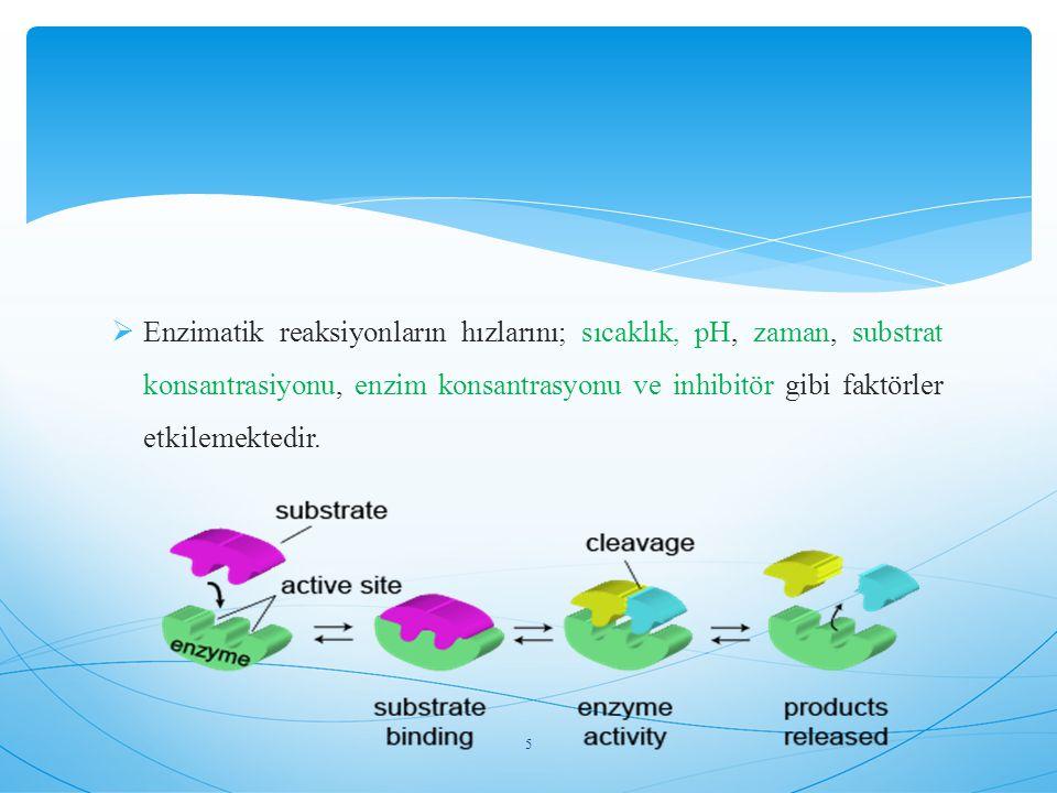 Enzimler tarafından katalizlenen kimyasal reaksiyonların bilimine Enzim kinetiği denir.