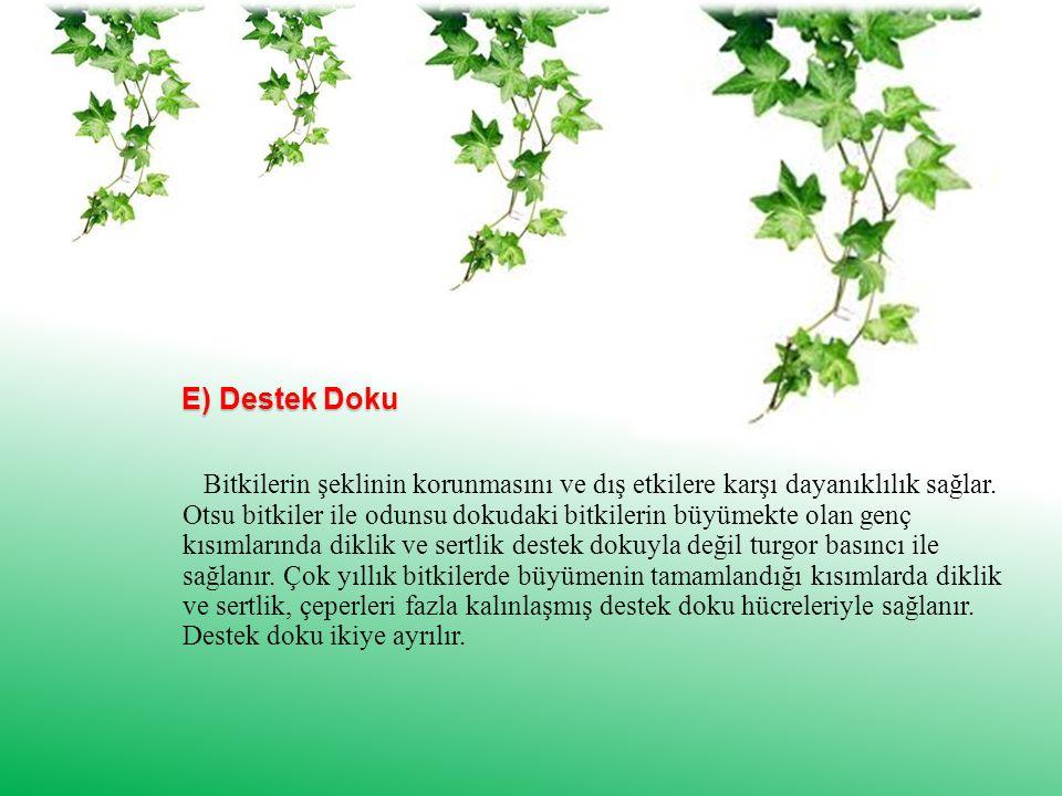 E) Destek Doku Bitkilerin şeklinin korunmasını ve dış etkilere karşı dayanıklılık sağlar.